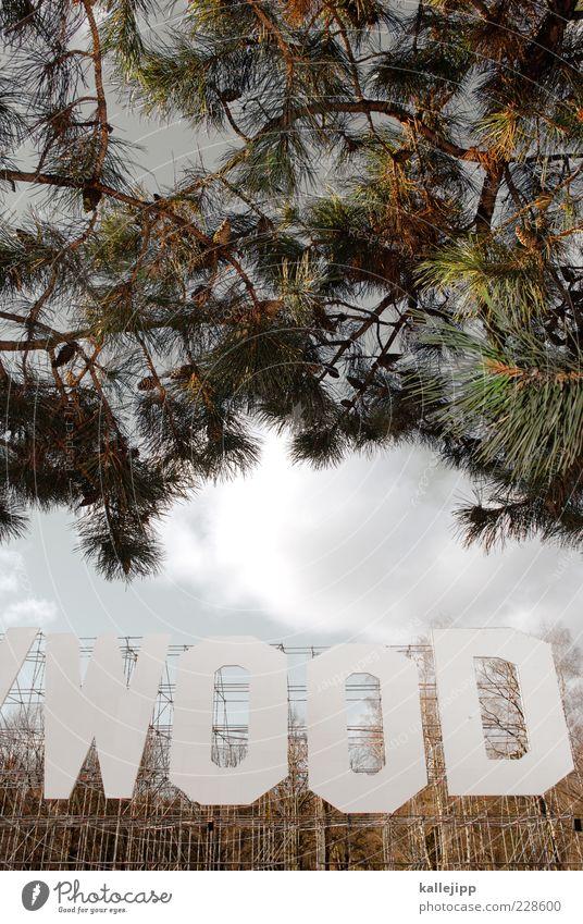 holy-wood Umwelt Natur Klima Pflanze Baum Wald Schriftzeichen nachhaltig Hollywood Ast Kiefer Gerüst Waldsterben Holz Zapfen grün Kunst Kunstwerk Farbfoto