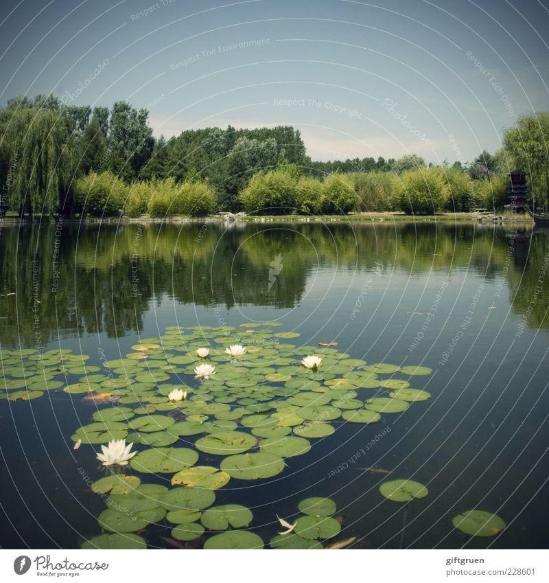 schwimmgruppe Umwelt Natur Landschaft Urelemente Wasser Himmel Sommer Schönes Wetter Pflanze Baum Blume Gras Sträucher Blatt Blüte Park Wiese Teich See