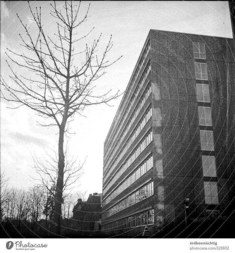 Bonjour Tristesse Baum Winter Haus kalt Fenster grau Glas Fassade Beton Armut Vergänglichkeit Gesellschaft (Soziologie) Container Plattenbau hässlich