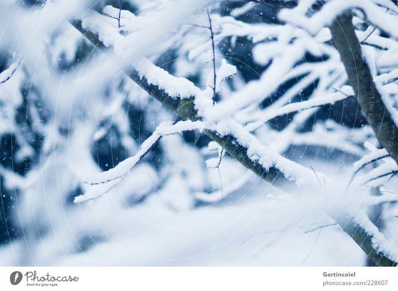 Rückfall Natur Baum Winter kalt Schnee Wetter Ast Zweig Geäst