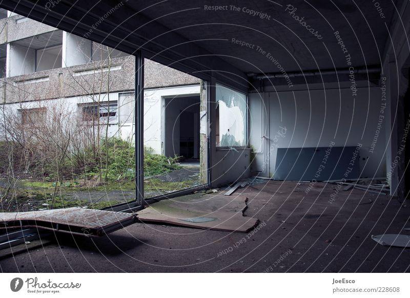 schöner wohnen Einsamkeit dunkel Fenster Wand Mauer Gebäude Raum Wohnung dreckig kaputt Sträucher Bauwerk Sauberkeit entdecken Verfall Ruine
