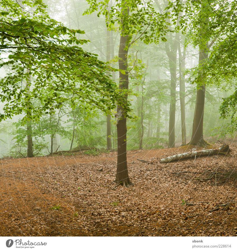 ardennenwald Umwelt Natur Landschaft Pflanze Nebel Baum Blatt Wald grün mehrfarbig Licht Menschenleer natürlich Dunst