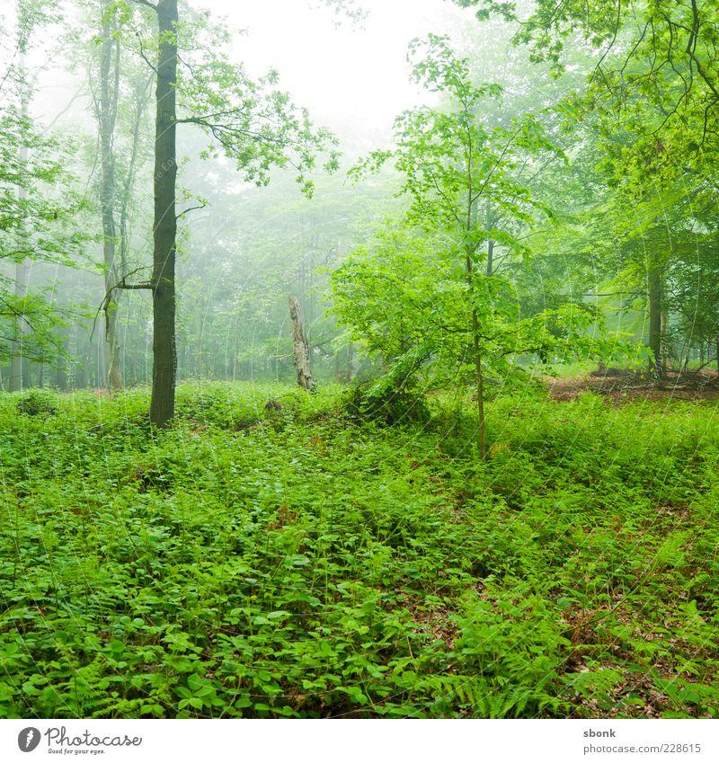 dickicht Natur grün Baum Pflanze Wald Umwelt Landschaft Nebel natürlich Sträucher Urwald