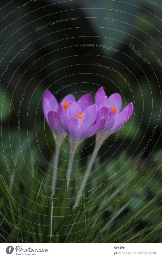 zusammenstehen Natur Pflanze schön grün Blume Blüte Frühling Gras Garten Zusammensein Freundschaft Park Wachstum Blühend neu violett