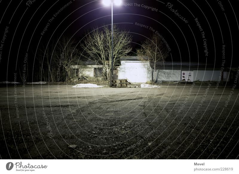 Nightbox Baum ruhig Einsamkeit Ferne kalt Wand Schnee Sand Mauer Stimmung Lampe Feld Kraft Energie ästhetisch bedrohlich