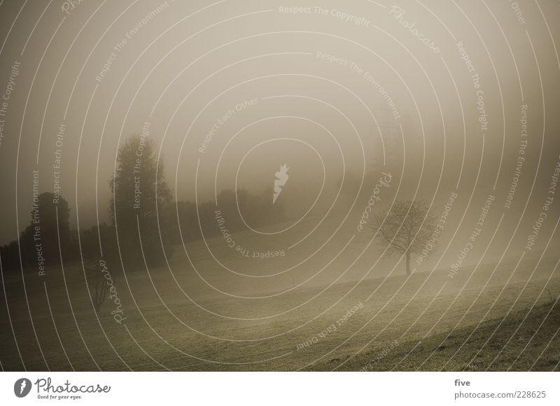 lonely tree Natur Landschaft Himmel Wolken Herbst schlechtes Wetter Nebel Eis Frost Pflanze Baum Sträucher Wiese Feld Wald Hügel dunkel trist Stimmung Farbfoto