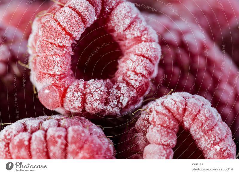 eiskalt und süß Frucht Himbeeren Ernährung Bioprodukte Vegetarische Ernährung Tiefkühlkost Gesunde Ernährung frisch Gesundheit lecker rot gekühlt gefroren