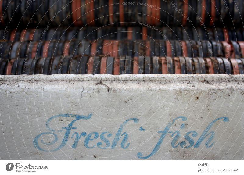 fresh fish* alt blau weiß rot ruhig schwarz Zeit dreckig frisch Schriftzeichen Fisch gut Kunststoff Gelassenheit Kiste seltsam