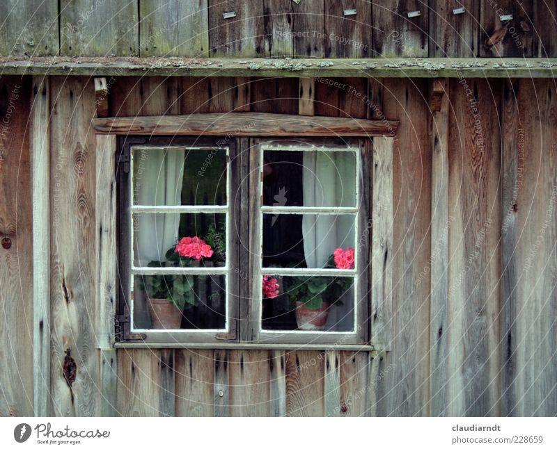Flowers in the window Blume Topfpflanze Haus Hütte Gebäude Fassade Fenster alt Pelargonie Holzhaus Sprossenfenster Gardine Fensterscheibe Fensterrahmen