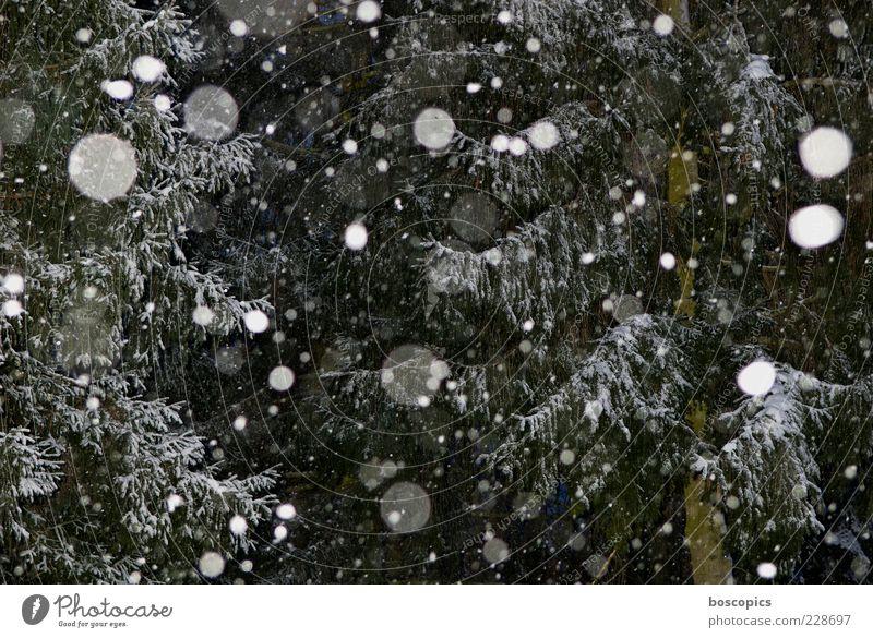 es schneit Umwelt Natur Klima Wetter schlechtes Wetter Schnee Schneefall Baum chaotisch Farbfoto Außenaufnahme Nacht Blitzlichtaufnahme Zentralperspektive