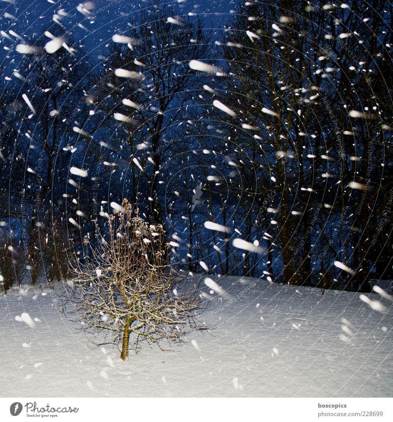 winter Natur blau weiß Baum Winter kalt Schnee Schneefall Wetter Klima chaotisch schlechtes Wetter Nachtaufnahme Nacht
