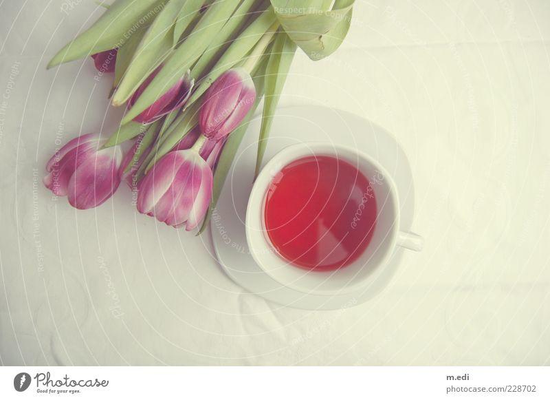 fairyteaparty Getränk Heißgetränk Tee Pflanze Blume Tulpe liegen süß Kitsch Farbfoto Innenaufnahme Hintergrund neutral Vogelperspektive Menschenleer weiß