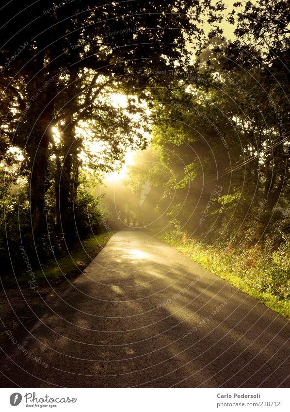 Frühnebel harmonisch Erholung Freiheit Sommer Natur Landschaft Pflanze Sonnenlicht Klima Nebel Baum Wald Straße Wege & Pfade leuchten friedlich Hoffnung