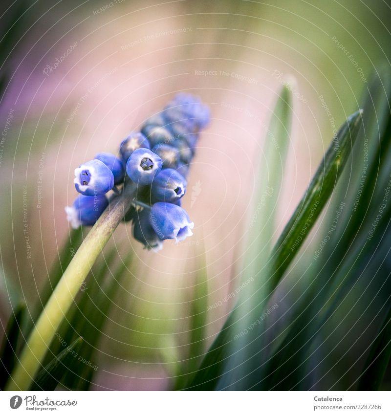 Wachsen und gedeihen | warum nicht schon jetzt Natur Pflanze schön grün weiß Blatt Wald Leben Blüte Frühling Garten rosa Design Wachstum ästhetisch Fröhlichkeit