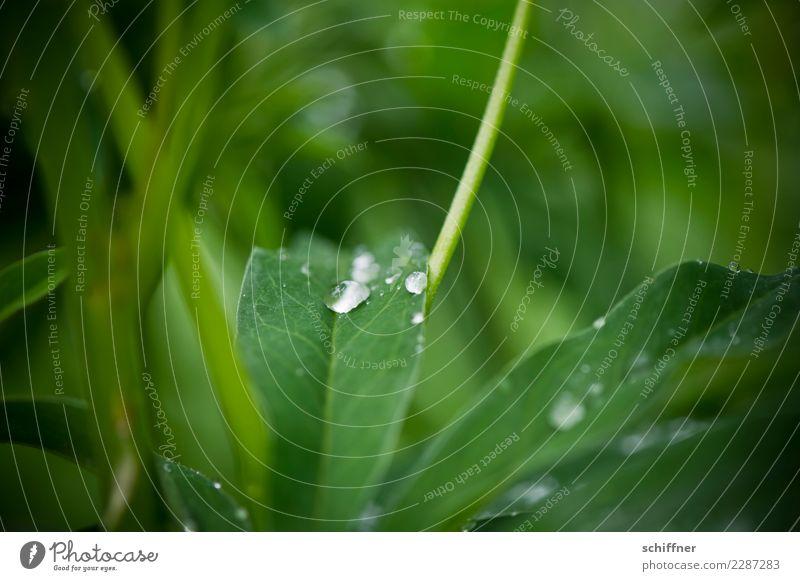 Durststrecke | wann kommt Regen? Umwelt Natur Pflanze schlechtes Wetter Blatt Grünpflanze Wildpflanze grün Landkreis Regen Tropfen tropfend Wassertropfen