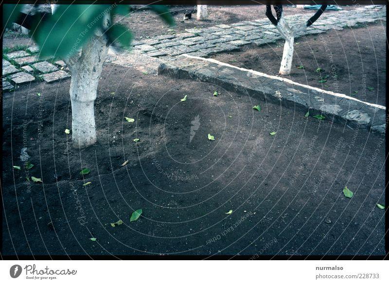 Apfelsinen Park Natur Baum Sommer Blatt Ferne Umwelt Freiheit Landschaft Garten Stimmung Park Insel Wachstum Lifestyle Boden trist