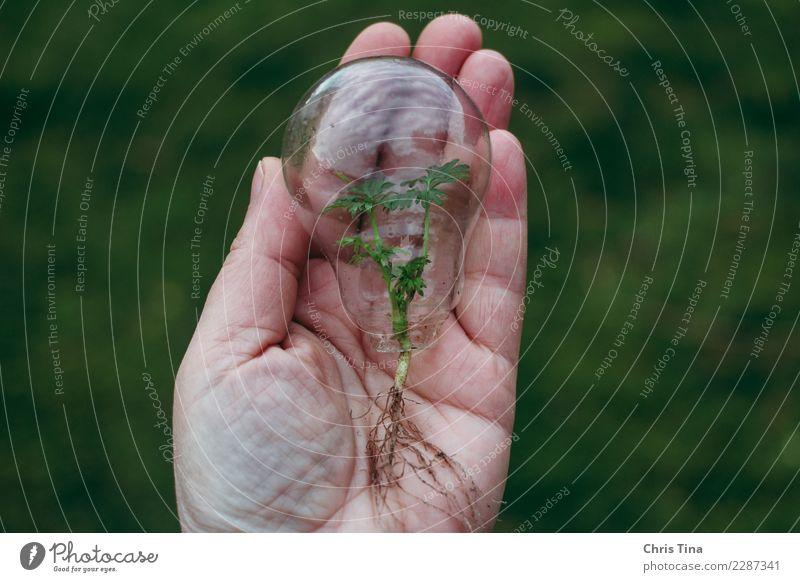 Grüne Energie Energiewirtschaft Erneuerbare Energie Sonnenenergie Hand 45-60 Jahre Erwachsene Umwelt Glas Denken entdecken leuchten nachhaltig Verantwortung