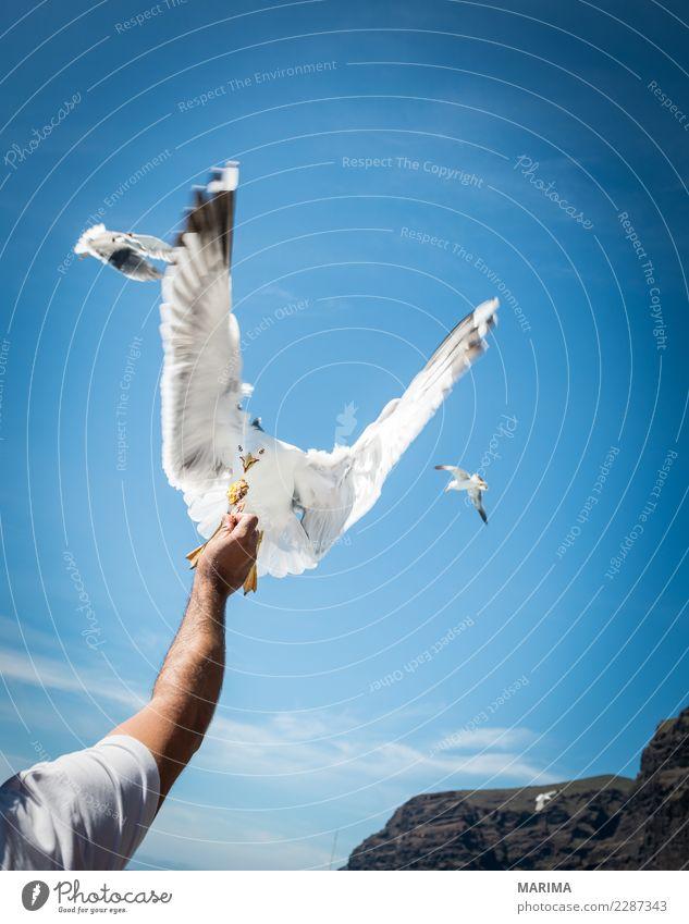 gull feeding Ferien & Urlaub & Reisen Tourismus Expedition Meer Natur Tier Küste Seeufer Bootsfahrt Wildtier Vogel Schwarm fliegen Fressen frech frei wild blau