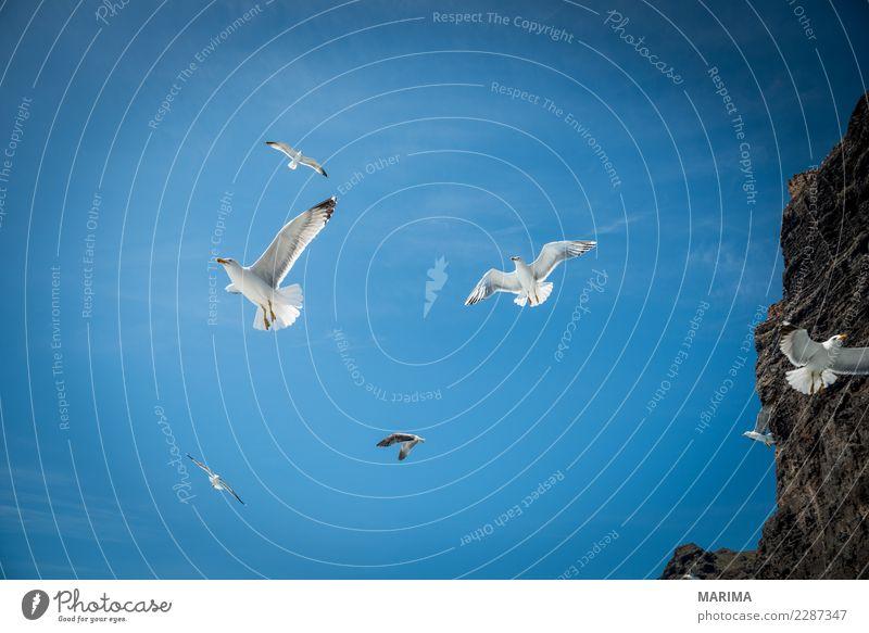 gull feeding Natur Ferien & Urlaub & Reisen Meer Tier Küste Vogel fliegen Europa Möwe Island Schwarm Lachmöwe Walbeobachtung