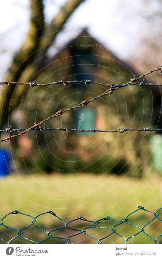 Schrebergartenidylle Umwelt Natur Herbst Schönes Wetter Efeu Garten Haus Gebäude Hütte Gartenhaus Zaun Maschendrahtzaun Stacheldraht Stacheldrahtzaun grün