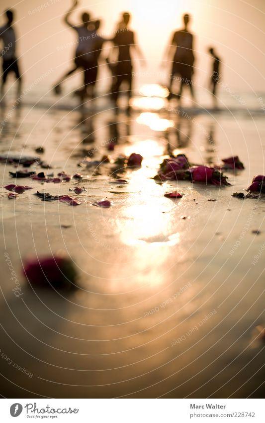 Rosige Aussichten Mensch Sonne Blume Ferien & Urlaub & Reisen Sommer Meer Strand Leben Freiheit springen Glück Küste Menschengruppe Feste & Feiern Tanzen