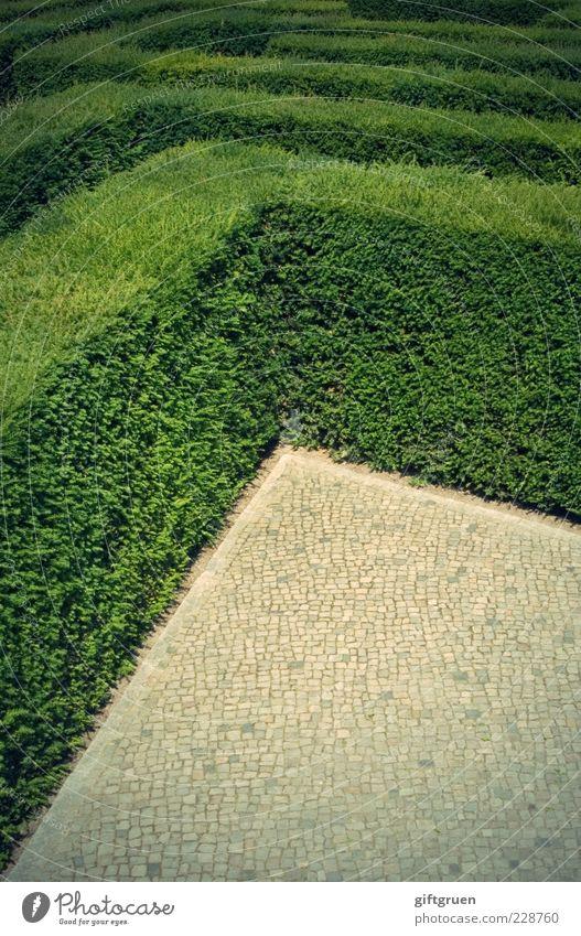get me outta here! Pflanze Grünpflanze Ausdauer Neugier Verzweiflung Rätsel Wege & Pfade Ziel Labyrinth Strukturen & Formen orientierungslos Orientierung