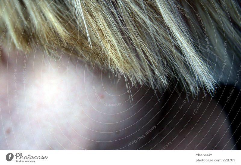kühl. blond. Mensch schön Kopf Haare & Frisuren elegant Haut frisch außergewöhnlich ästhetisch Wachstum Coolness nah Hals geschnitten kurzhaarig