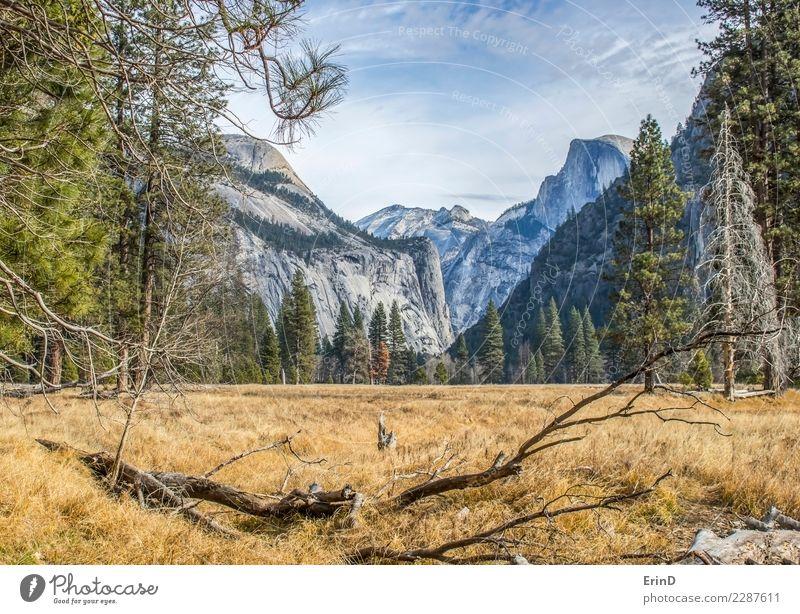 Wiese im Yosemite National Park mit Wald und Bergen schön ruhig Ferien & Urlaub & Reisen Tourismus Abenteuer Winter Berge u. Gebirge wandern Natur Landschaft