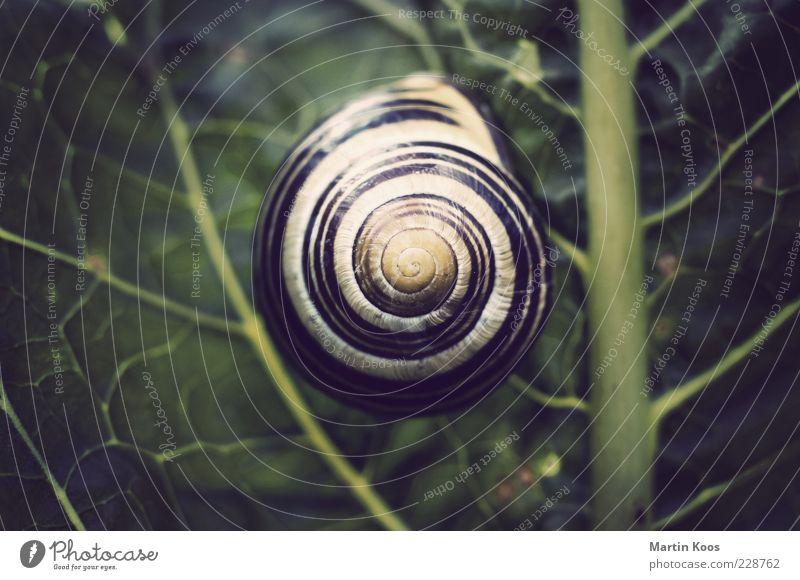 Haus im Grünen Natur Pflanze Blatt Schnecke 1 Tier rund Zufriedenheit Design Schutz Muster Linie Schneckenhaus Spirale Kreis Farbfoto Polaroid Licht Schatten
