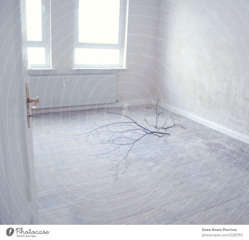das zimmer,meines schatz. Pflanze Einsamkeit Fenster Wand Gefühle Mauer Traurigkeit hell Tür Raum Wohnung Autofenster Häusliches Leben Trauer Ast Schlüssel