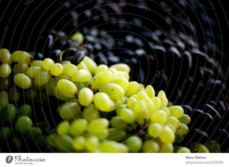 Fruchtig Lebensmittel Weintrauben Beeren Marktstand Bioprodukte Vegetarische Ernährung Gesundheit lecker saftig süß grün schwarz Natur Weinlese grün-gelb Haufen