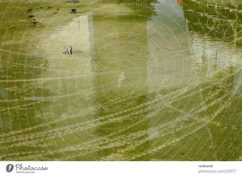 Grüne Spuren Wasser grün Boden Brunnen obskur reif Teich Algen Chemnitz Sachsen Abdruck Reifenspuren