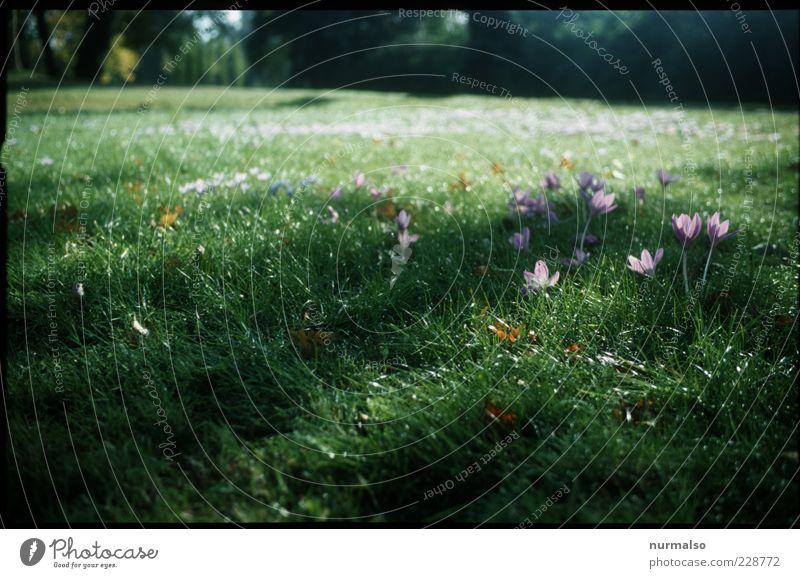 Vegetation, Future Natur schön Pflanze Blume Tier Wiese Umwelt Landschaft Gras Frühling Stimmung Park nass frisch Fröhlichkeit Wachstum