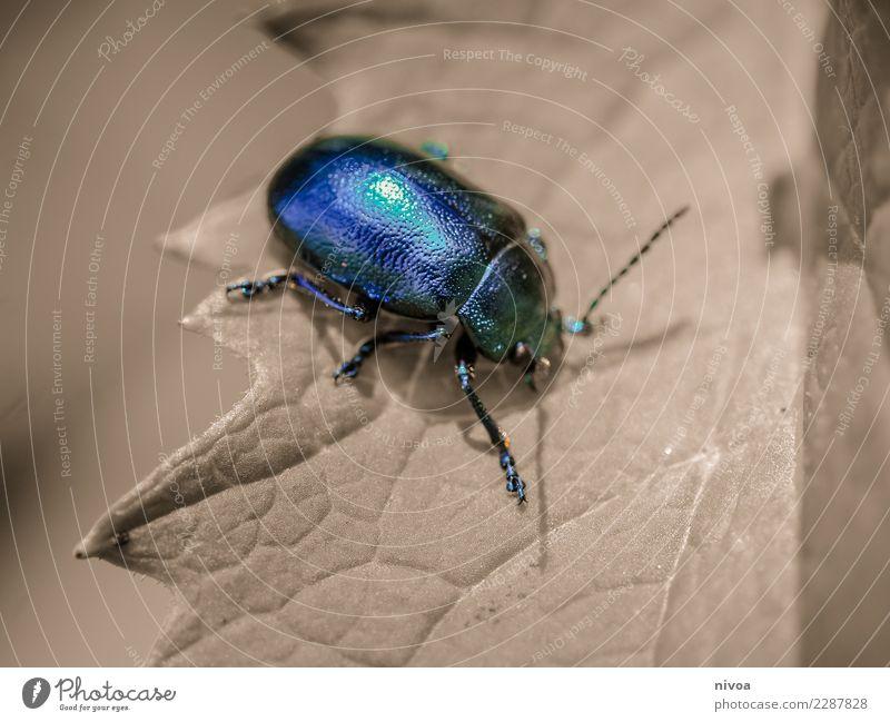 bug life Natur Pflanze blau Sommer Farbe Landschaft Tier Blatt Umwelt lustig Wiese Kunst fliegen Wetter glänzend authentisch