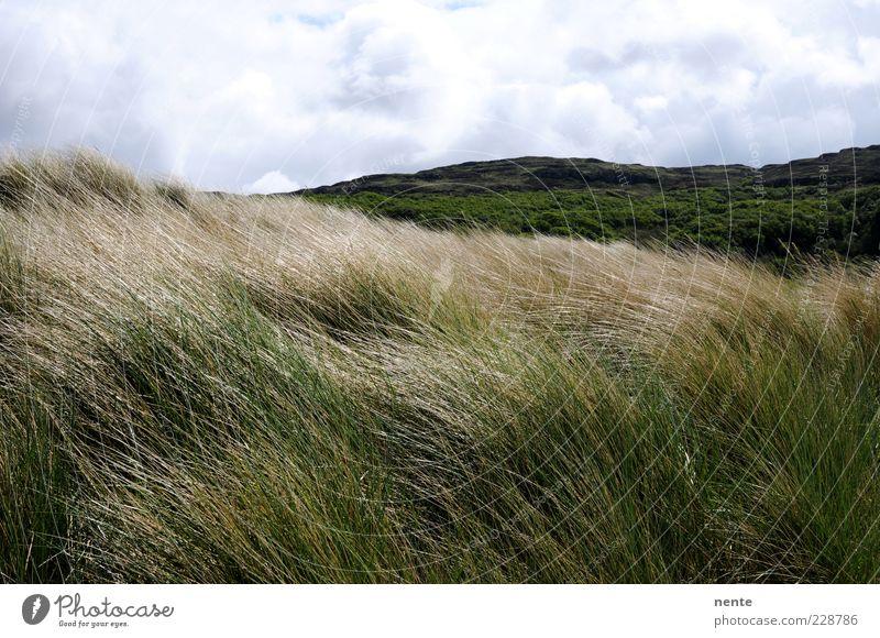 Calgary Natur grün Pflanze Einsamkeit Ferne Landschaft Gras braun Zufriedenheit Wind Hügel Stranddüne Halm Wolkenhimmel Dünengras