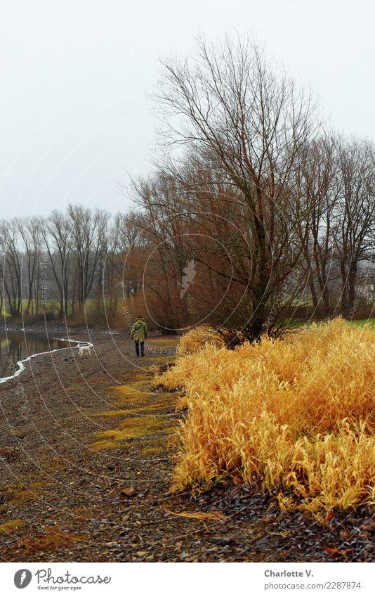 Winterspaziergang Ausflug Spaziergang Spazierweg Landschaft schlechtes Wetter Baum Gras Seeufer Haustier Hund 1 Tier Erholung gehen laufen leuchten einfach