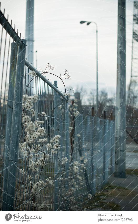 trist Umwelt Winter schlechtes Wetter Pflanze Sträucher Wildpflanze Menschenleer Industrieanlage Schornstein ästhetisch authentisch kalt blau grau Stimmung