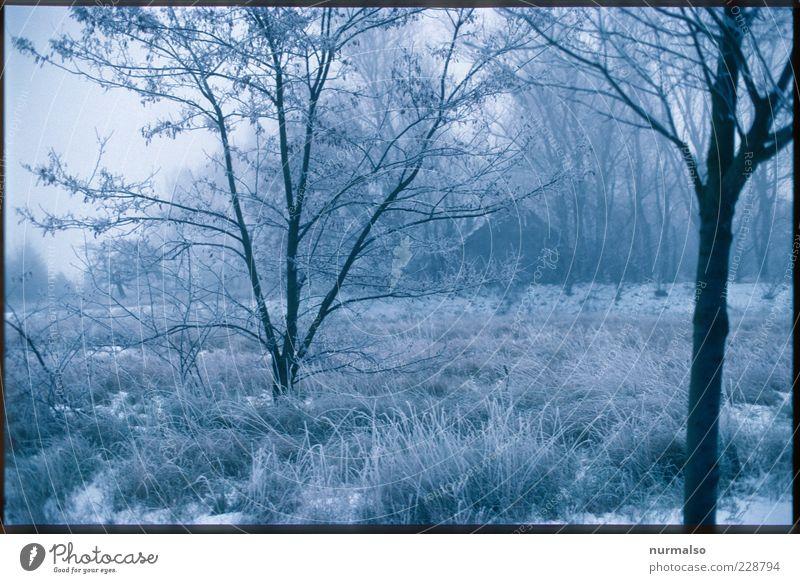 Kalt allein zu Haus Umwelt Natur Landschaft Pflanze Tier Winter Klima Schönes Wetter Nebel Eis Frost Baum Gras Garten Wiese frieren glänzend träumen ästhetisch
