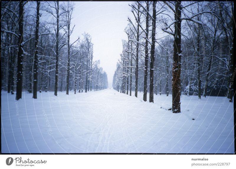 kalte Ferne Natur Winter Ferne Wald Erholung Schnee Umwelt Landschaft Wege & Pfade Eis gehen trist Frost Wellness Ziel Baumstamm