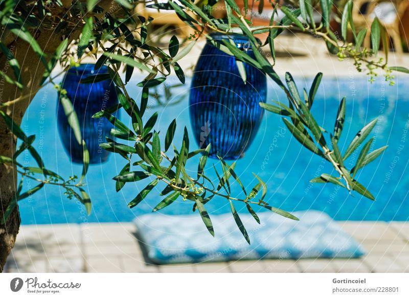 Mediterran Lifestyle Wellness Wohlgefühl Erholung Sommer Pflanze Baum Nutzpflanze Wärme mediterran Olivenbaum Olivenblatt Kissen Farbfoto Außenaufnahme Tag