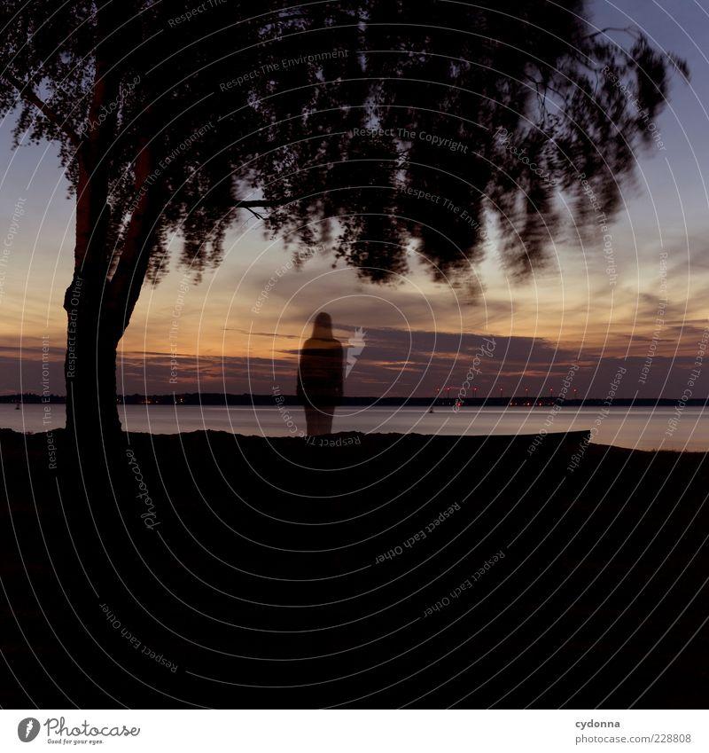 Stehen geblieben Lifestyle Wohlgefühl Erholung ruhig Abenteuer Ferne Freiheit Umwelt Natur Landschaft Sonnenaufgang Sonnenuntergang Baum Seeufer Bewegung