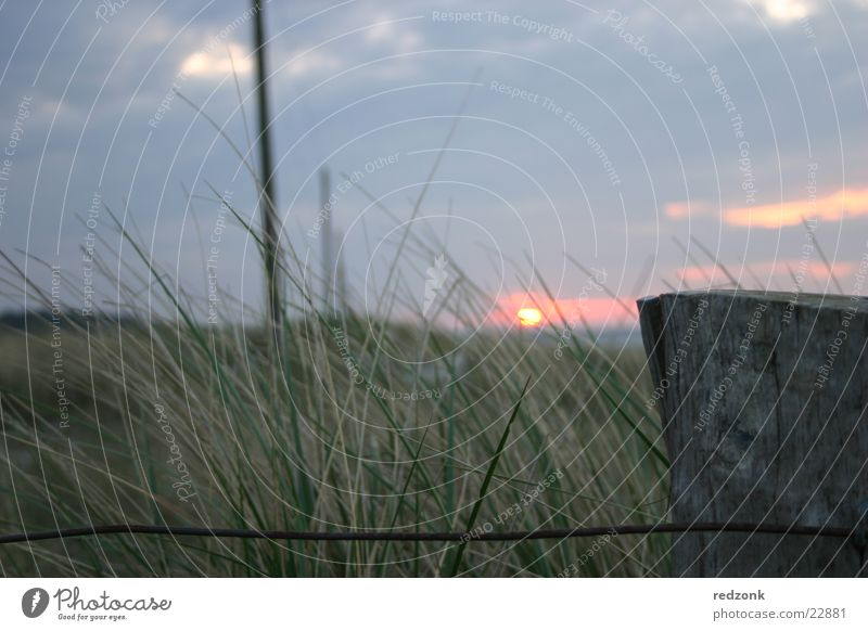 Dünen im Abendrot I Sonnenuntergang Zaun Wiese Gras Hügel Meer Wolken Stranddüne Strommast