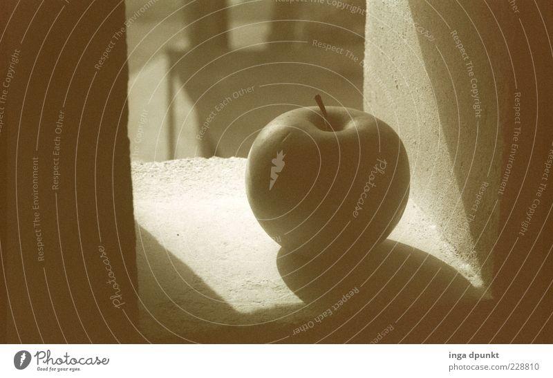 Schattenapfel Pflanze Baum ruhig Wand Mauer grau Stil Garten Stimmung außergewöhnlich Frucht authentisch warten ästhetisch Zeichen Stillleben
