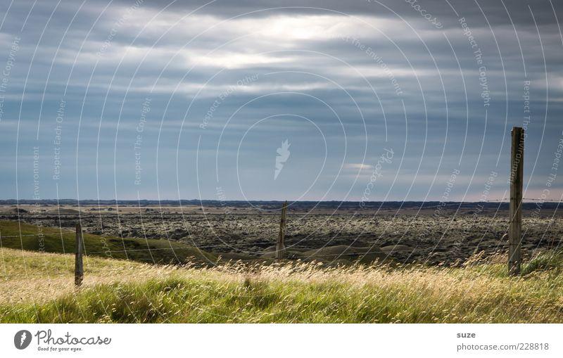 Es ist so still Himmel Natur blau grün Sommer Landschaft dunkel Umwelt Wiese Gras Holz außergewöhnlich Horizont Stimmung Wetter Wind