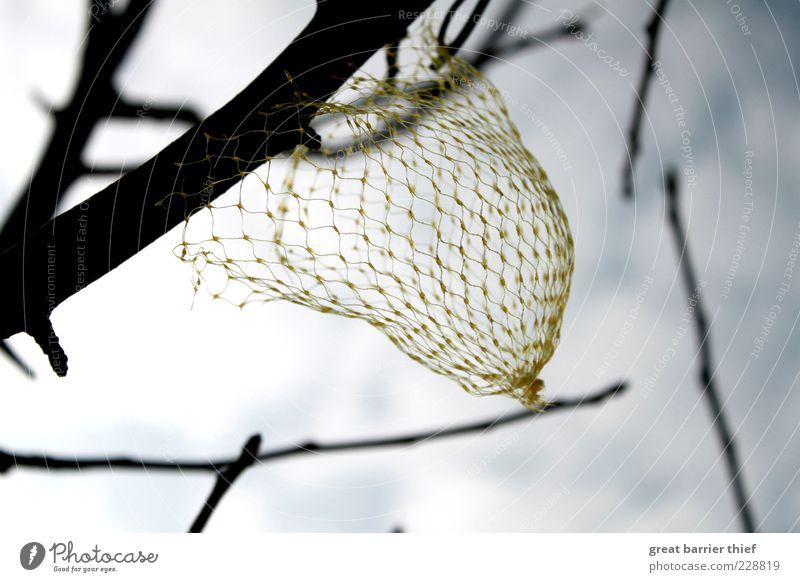 Der frühe Vogel war schon da Himmel Natur Pflanze gelb oben leer Netz hängen Zweige u. Äste Vogelfutter