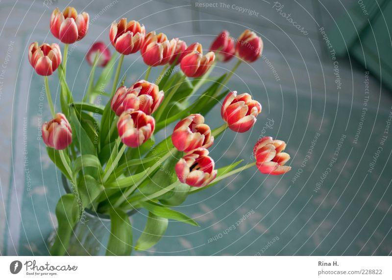 Tulpen im Bad II rot Blume Gefühle Stil elegant Lifestyle Blühend Blumenstrauß Tulpe Frühlingsgefühle