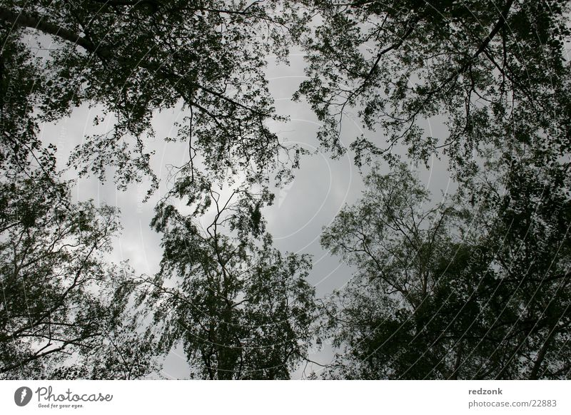 Blätterhimmel Himmel Baum Blatt Wolken dunkel Ast schlechtes Wetter