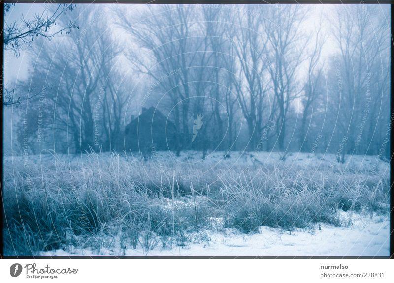einsam und alleine Haus Natur Landschaft Pflanze Winter Klima schlechtes Wetter Nebel Eis Frost Baum Wiese Wald dunkel kalt natürlich Stimmung Morgendämmerung