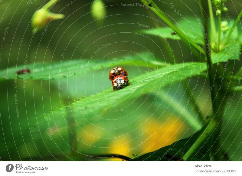 Erwischt! Natur Pflanze Sommer grün rot Erotik Tier Blatt Freude Liebe Frühling Wiese natürlich Gefühle klein Glück