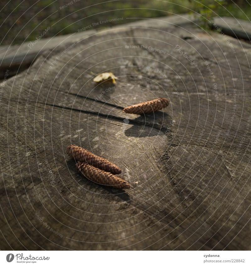 Der Zapfen fällt nicht weit vom Stamm harmonisch ruhig Umwelt Natur ästhetisch einzigartig elegant entdecken Freiheit geheimnisvoll Idylle Leben nachhaltig